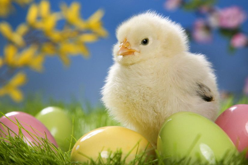 Wide HD Easter Wallpapers | D-Screens HDQ Cover