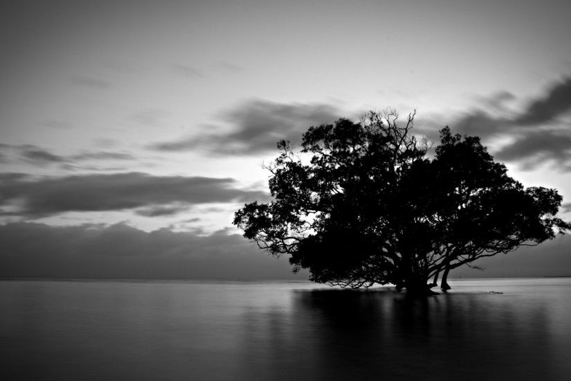 Tree-Black-and-White-Wallpaper-Collections