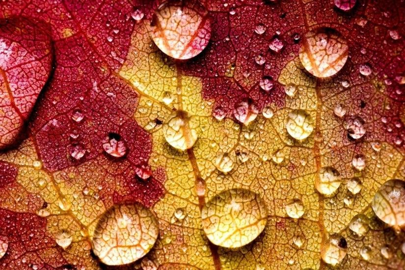 #883311 Color - Fall Forest Autumn Drops Nature Leaves Tree Landscape Leaf  Best Wallpaper Desktop