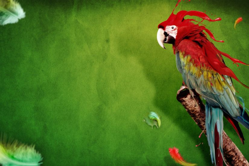 Latest Parrot Wallpaper