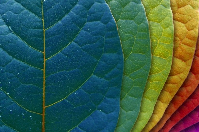 Leaf HD Wallpaper | Background Image | 1920x1200 | ID:361066 - Wallpaper  Abyss