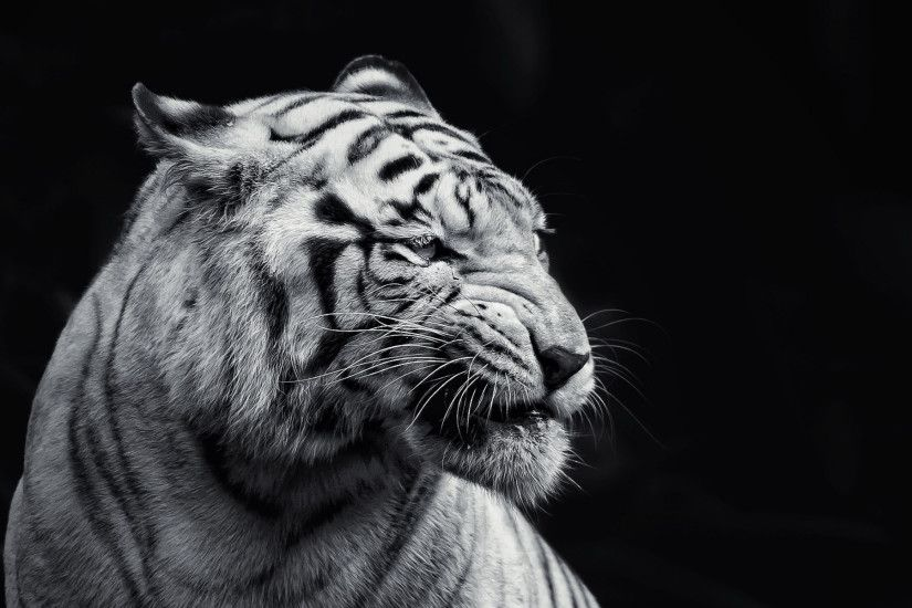 Tiger Hd Wallpapers For Desktop Group 90