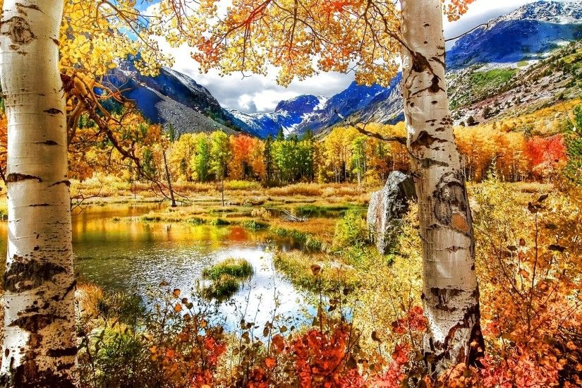 Landscape Leaf Leaves Color Seasons Tree Season Fall Nature Forest Autumn  Wallpaper For Galaxy S3 Mini - 1920x1080