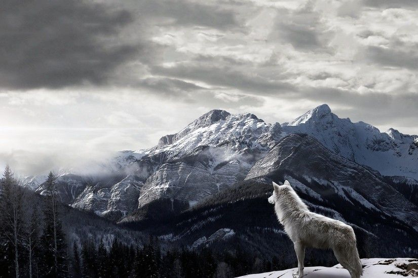 Wolf HD Wallpapers Backgrounds Wallpaper