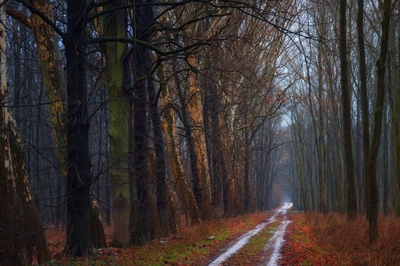 Nature Road Autumn Roads Background Forests Trees
