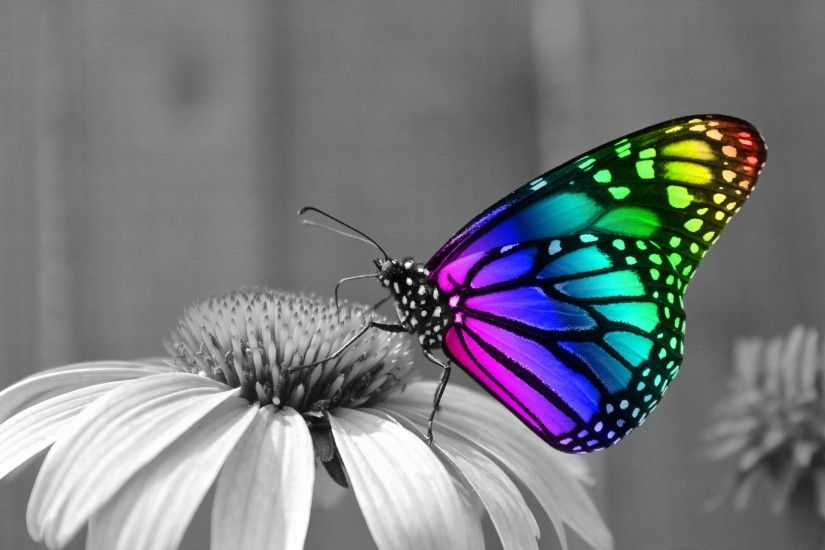 Rainbow Butterfly Desktop Background HD #9859