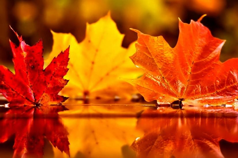 Autumn Leaves Wallpapers for Desktop Background Wallpaper