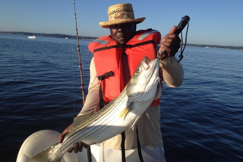... fish Jerry Dorsey striper 7-27-2015 ...