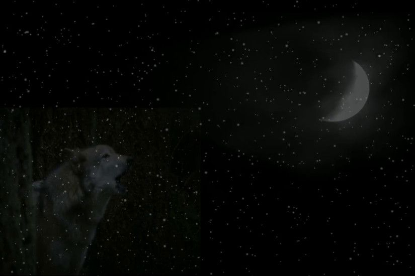 Gray Wolf howling at moon in the snowfall Stock Video Footage - VideoBlocks