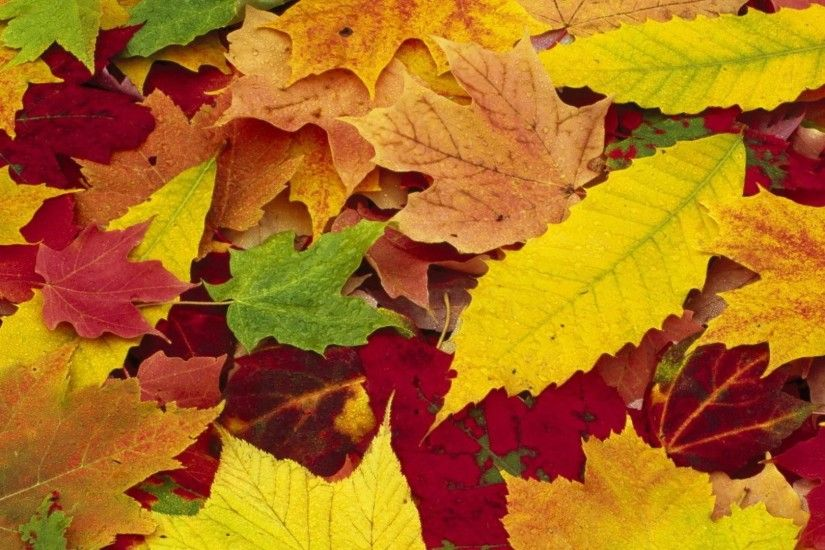 Autumn Leaves Background 484527; autumn carpet leaves background desktop