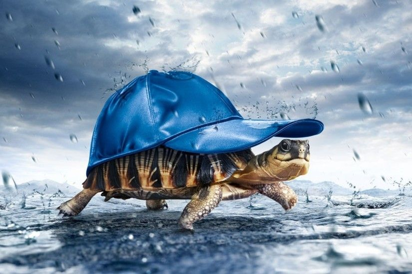 Wallpapers Animal Black And White Animals Nature Rain Forest Hd Funny Fun  Hat Sky Tortoise