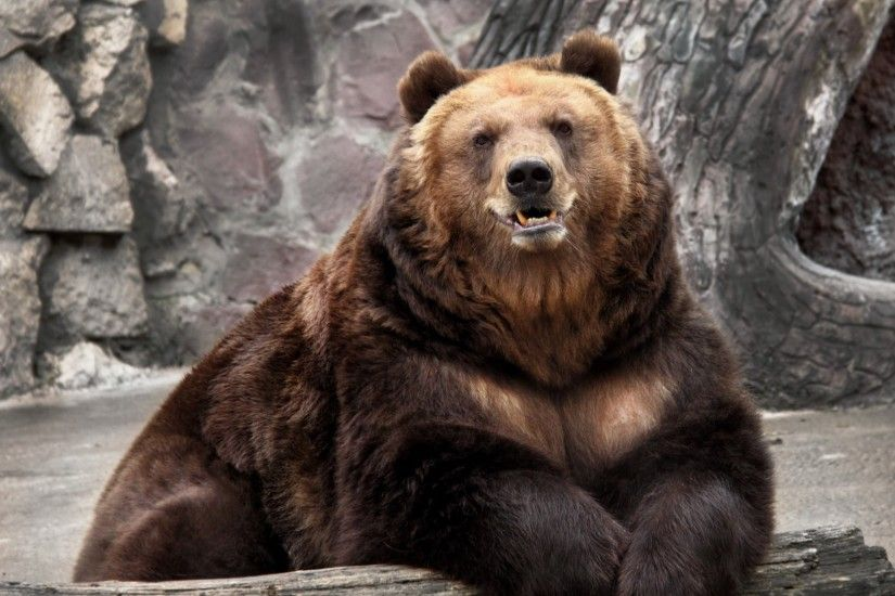 Preview wallpaper bear, zoo, nature, reserve, muzzle 1920x1080