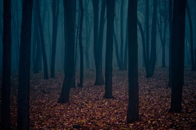 Forest Background 42 Hd Image - InFlux Background Forest.jpg | Steam  Trading Cards Wiki .