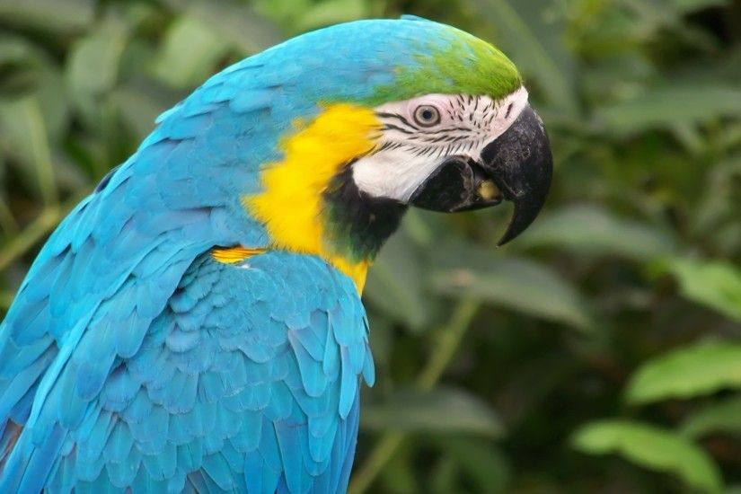 Blue Macaw Parrot Wallpaper Parrots Animals Wallpapers