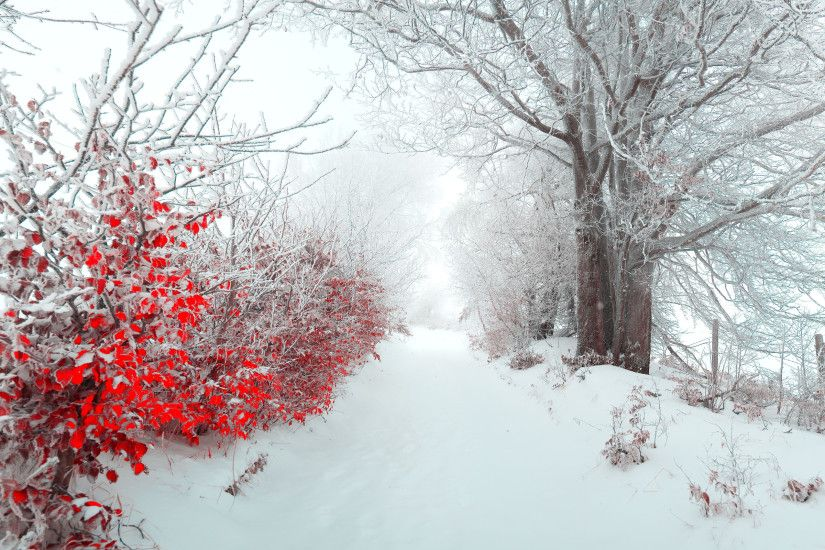 Christmas Nature Scenes HD Wallpapers 2 | Christmas Nature Scenes HD  Wallpapers | Pinterest | Nature scenes and Wallpaper