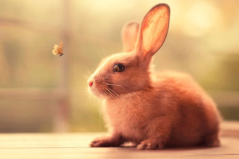 Cute Bunny Wallpapers Wallpaper 1920×1200
