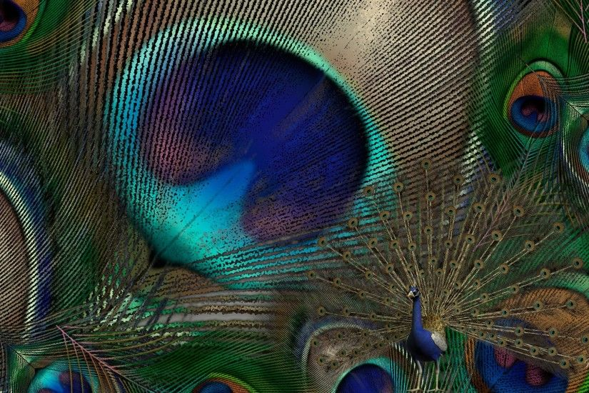 peacock-bird-feathers-wallpaper-7
