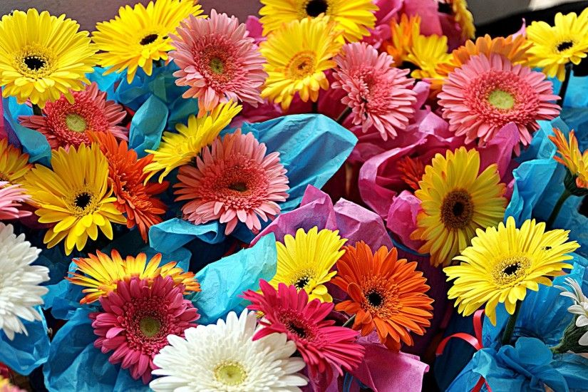 Colorful flowers wide beautiful background wallpapers