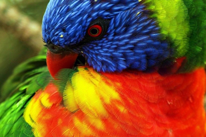 Find out: Tropical Colors Parrot wallpaper on http://hdpicorner.com/