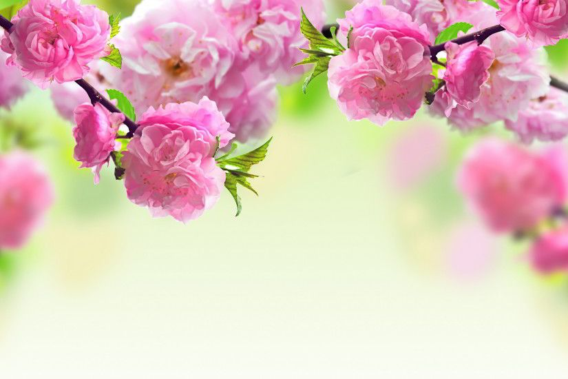 Spring flowers background Wallpaper in