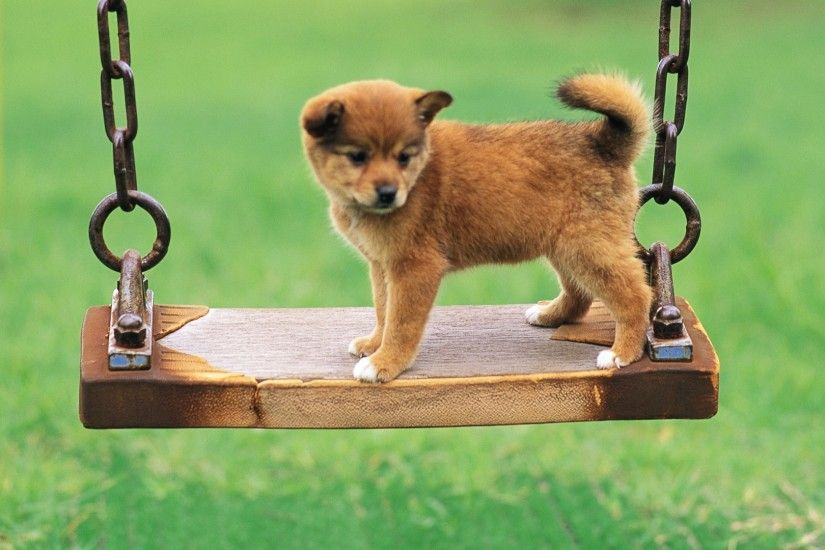 Cute puppy in a park Dog wallpaper Archives