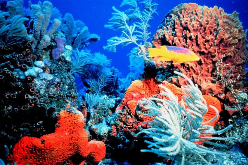 Colorful Coral Reef