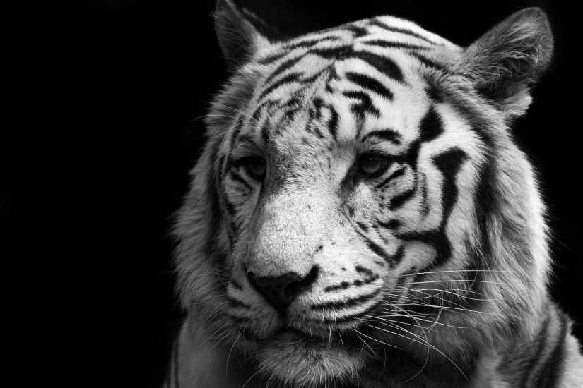 White Tiger Computer Wallpapers, Desktop Backgrounds 2100x1400 Id ..