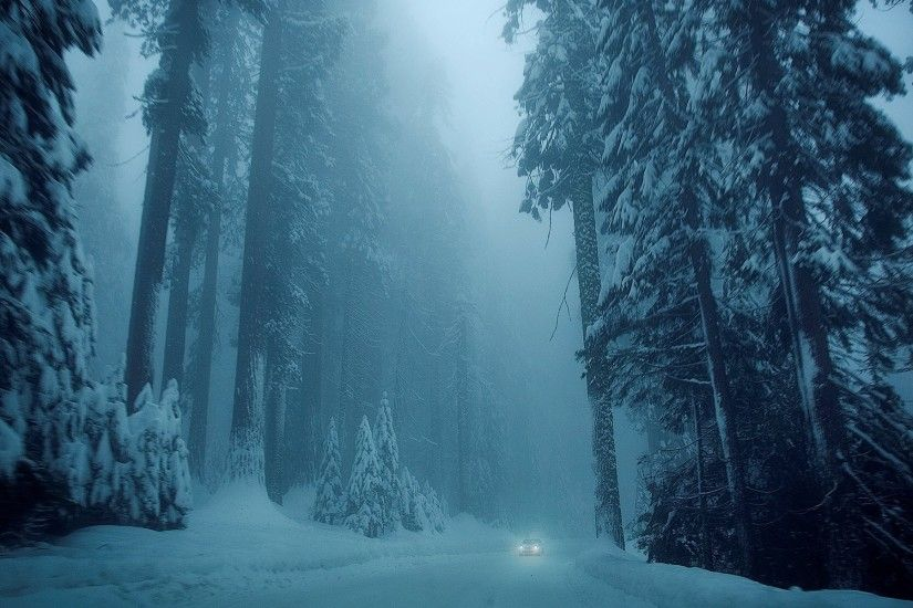 nature winter snow tree tree christmas tree road machine vehicles cool  winter nature car trees snow