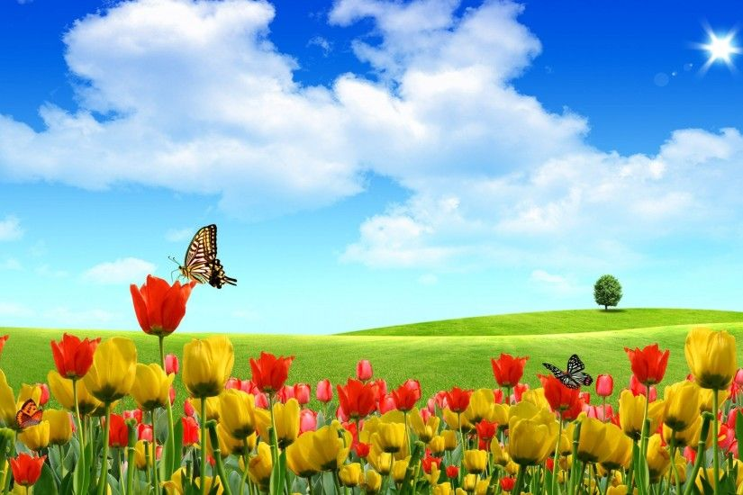 Field of Tulip flowers Background