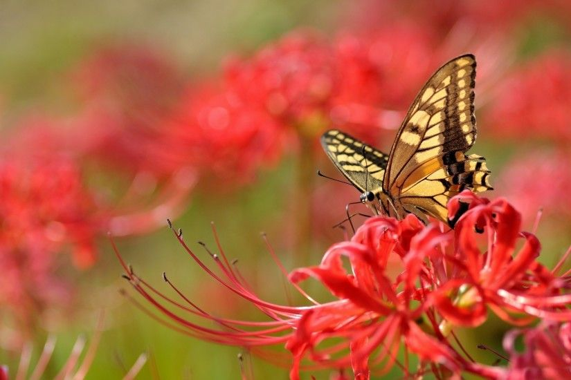 ... Flowers and a Butterfly wallpaper | wallpaper free download