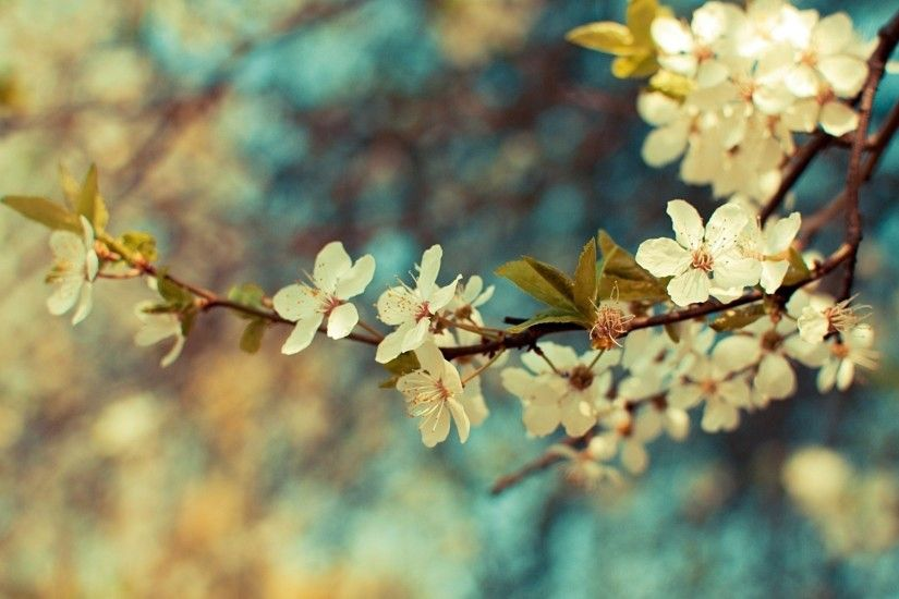 Vintage Flower Wallpaper Tumblr 24511