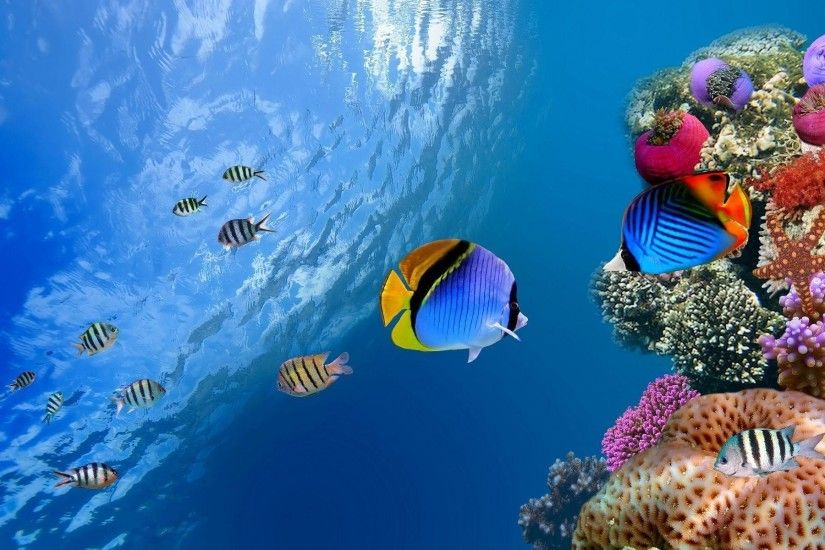Wallpapers For > Tropical Fish Backgrounds