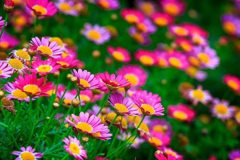 Most Beautiful Flowers Wallpaper