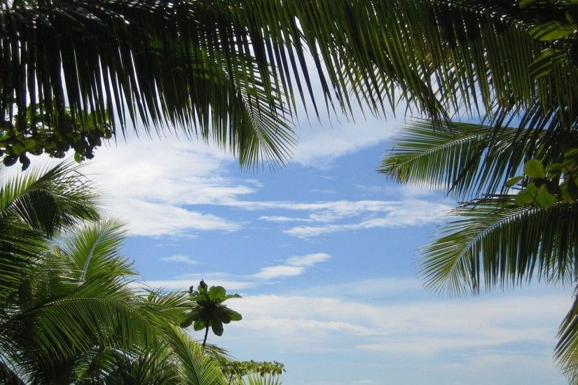 Tropical background Wallpapers | Pictures