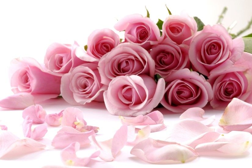 Delicate beautiful light pink roses wallpapers