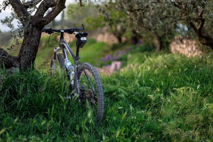 Preview wallpaper bicycle, grass, trees 3840x2160