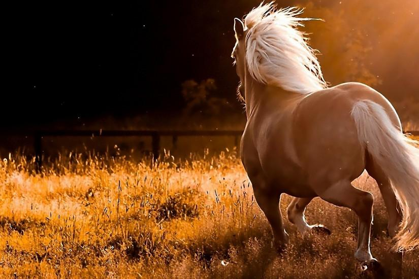 cool horse backgrounds 1920x1080 for lockscreen