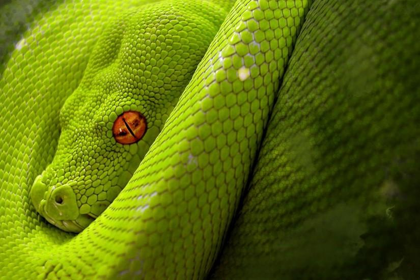 Full HD p Snake Wallpapers HD, Desktop Backgrounds 640×512 Snake Image  Wallpapers (