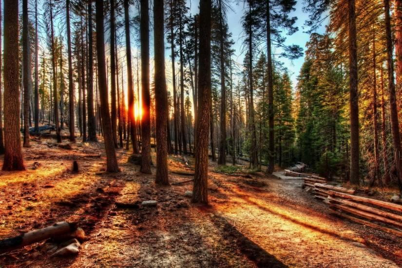 ... full-hd-forest-wallpapers ...