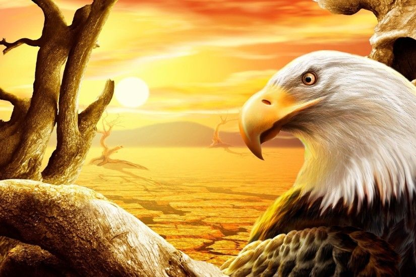 tree, eagle, beak, bald eagle, sunset