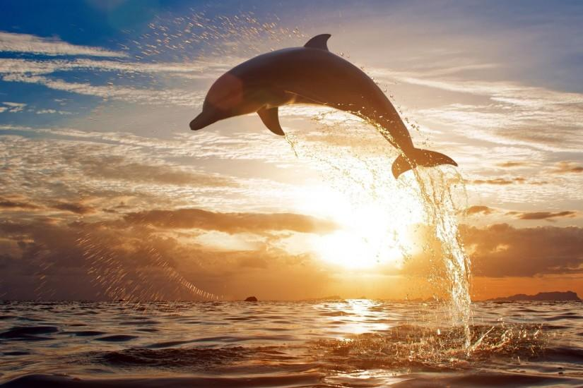 Dolphin Jumping HD Wallpapers - HD Wallpapers Inn