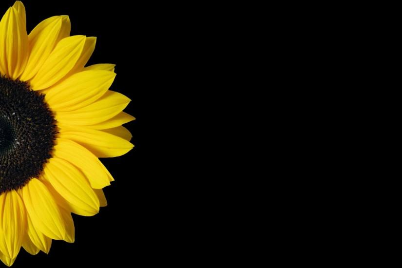 new sunflower background 1920x1261 for iphone