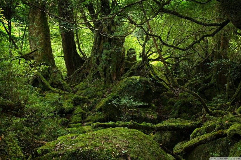 Rainforest Wallpapers - Wallpaper Cave Rainforest Wallpaper -  WallpaperSafari Rain ...