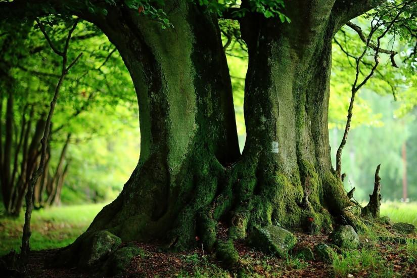download free tree wallpaper 1920x1200 for windows