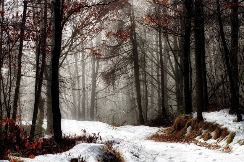 ... Download Free First Snow HD Wallpaper ...