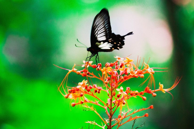 3840x2160 wallpaper Black, butterfly, insect, sit, blur