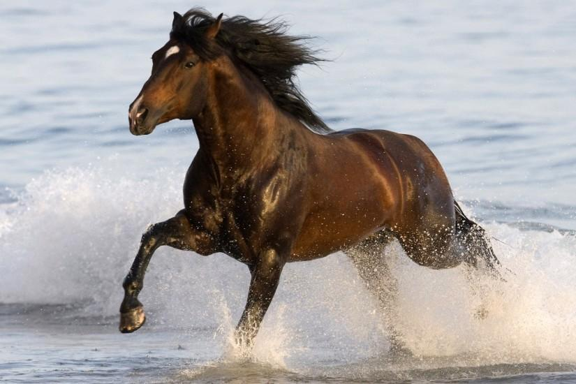best horse wallpaper 1920x1080 1080p