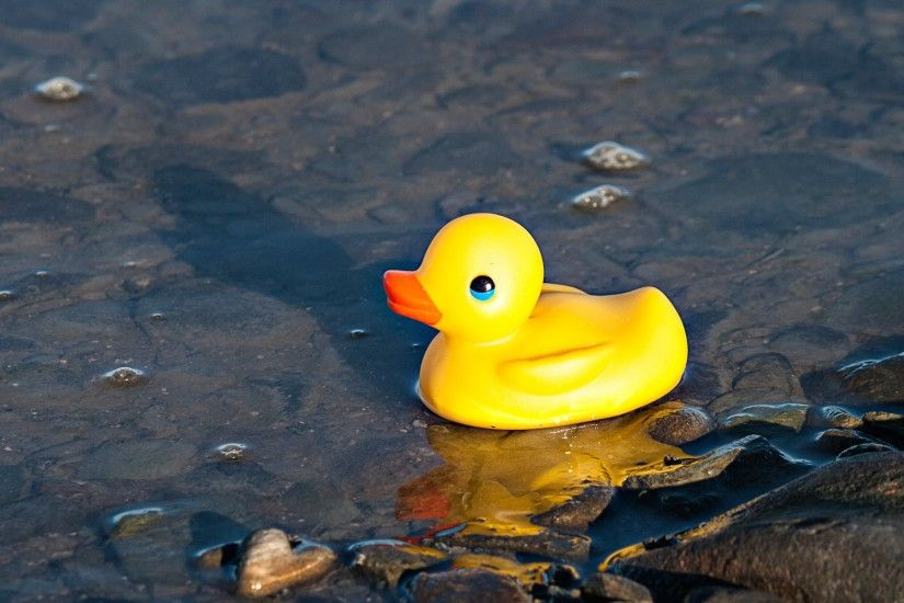 Rubber ducky picture, by friiskiwi for: rubber 2 photography