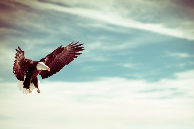 Flying Eagle Wallpaper