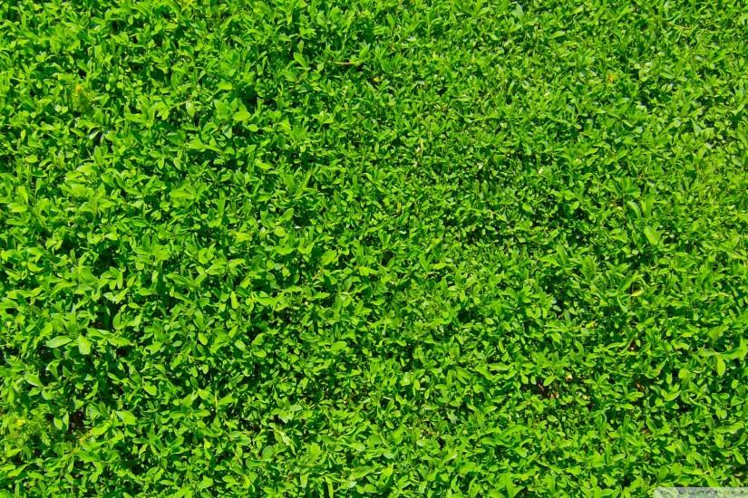 amazing grass wallpaper 1920x1080 for ipad 2